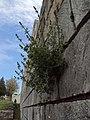 Shumen Fortress 013.jpg