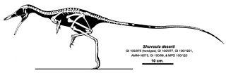 genus of reptiles (fossil)