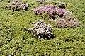 Sierra de Ayllón 1979 07.jpg