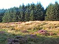 Sike Head, Plantation, Rombalds Moor - geograph.org.uk - 48507.jpg