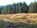 Sike Head, Plantation, Rombalds Moor - geograph.org.uk - 48507.jpg