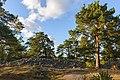 Skansbergets fornborg September 2013 04.jpg