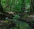 Small creek Lilla Sicka 2012.jpg