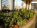 Solaire Resort & Casino0983 07.JPG