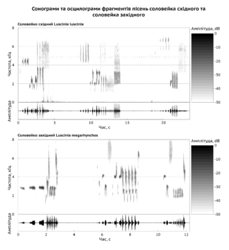 Bioacoustics - The sonograms of Thrush nightingale (Luscinia luscinia) and Common nightingale (Luscinia megarhynchos) singing help to distinguish these two species by voice definitely.