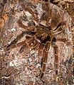 Spider151.jpg