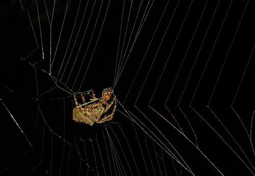 SpiderCatch.jpg