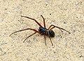 Spider ID (42833623880).jpg