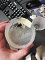 Spider in its container.jpg