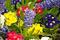 Spring, Botanic Gardens, Belfast (5) - geograph.org.uk - 773116.jpg