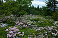 Spring-field-wildflowers - West Virginia - ForestWander.jpg