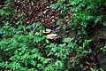 Spring-forest-fungis - West Virginia - ForestWander.jpg