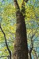 Spring Forest (3) (8688036270).jpg
