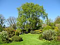 Springtime in the University Botanic Garden, Aberdeen - geograph.org.uk - 415040.jpg