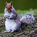Squirrel (30280003).jpeg