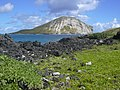 Starr-050224-0122-Tournefortia argentea-habit and view Manana-Kaohikaipu-Oahu (24441564230).jpg
