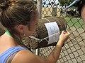 Starr-170824-0436-Leucaena leucocephala-Noe setting up bee monitoring stations-Kahului Airport-Maui - Flickr - Starr Environmental.jpg