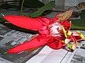 Starr 060905-8778 Passiflora vitifolia.jpg