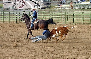 Steer wrestling - Steer wrestling at the CalPoly rodeo