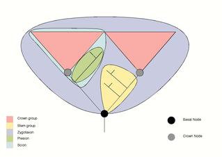 Crown eukaryotes