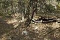 Stenkumla gravfält 4-1 - KMB - 16001000006846.jpg