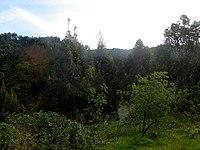 Bosque templado en la zona precordillerana de Santiago