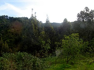 Santiago Province, Chile - Forest surroundings of the Province