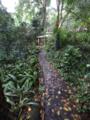 Stone footpath at Brisbane Botanic Gardens at Mount Coot-tha.tiff