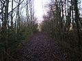 Streckenabschnitt Coesfeld–Rheine bei Lutum 2012-01-24 CLP 04.jpg