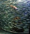 Sunshine Aquarium 3-22 (26381151585).jpg