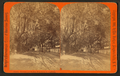 Sunshine and shadow, King Street, St. Augustine, Fla, from Robert N. Dennis collection of stereoscopic views 2.png