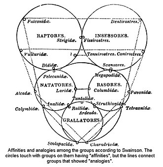 Quinarian system - Swainson's Quinarian structure of birds