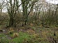Swampy woodland, Torridge valley - geograph.org.uk - 624244.jpg