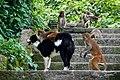 Swayambhunath Temple Monkey Temple, Kathmandu (30131294167).jpg