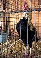 Tall chicken (121696597).jpg