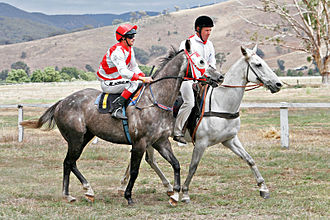 Glossary of Australian and New Zealand punting - A clerk of the course with a race starter.
