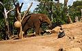 Taronga Zoo, Sydney (3365805647).jpg