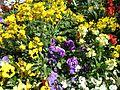 Teignmouth Blooms Again - 1 - Flickr - Sir Hectimere.jpg