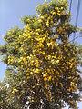 Temple Bell Tree YVSREDDY (6).jpg