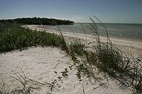 Ten Thousand Islands National Wildlife Refuge - Beach shore line and vegetation.JPG