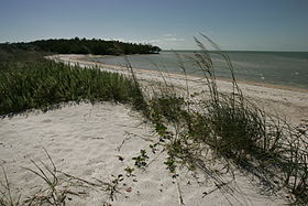 Ten Thousand Islands National Wildlife Refuge - Beach shore line and vegetation.JPG