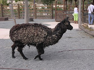 Terra Natura - A llama at the zoo