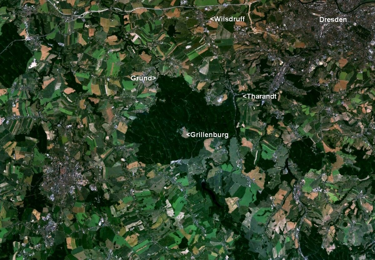 Tharandter Wald.jpg