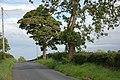 The Ballynanny Road near Loughbrickland - geograph.org.uk - 505281.jpg