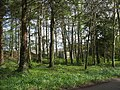The Bettws woodland with the Glynllifon workshops in the background - geograph.org.uk - 788576.jpg