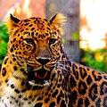 The Leopard I.jpg