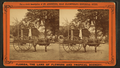 The Lightning Express of St. Augustine, Florida, from Robert N. Dennis collection of stereoscopic views.png
