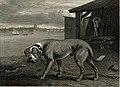 The Mastiff Reinagle 1894.jpg