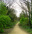 The Old Railway Cutting between Pudsey Greenside and Pudsey Lowtown - geograph.org.uk - 396210.jpg