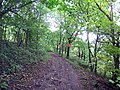 The Path through Hillside Plantation - geograph.org.uk - 296775.jpg